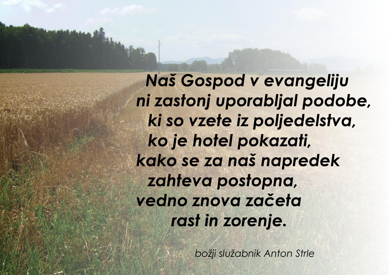 strle_rast_polje